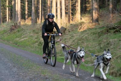 Zugleine hund fahrrad